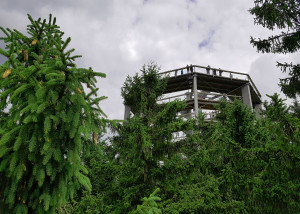 Тропа по верхушкам деревьев на Липно